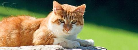 Чи правда, що у кішки 9 життів, а також інші цікаві факти про кішок