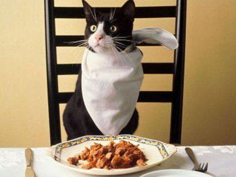 Правила годування та особливості харчування кастрованого кота
