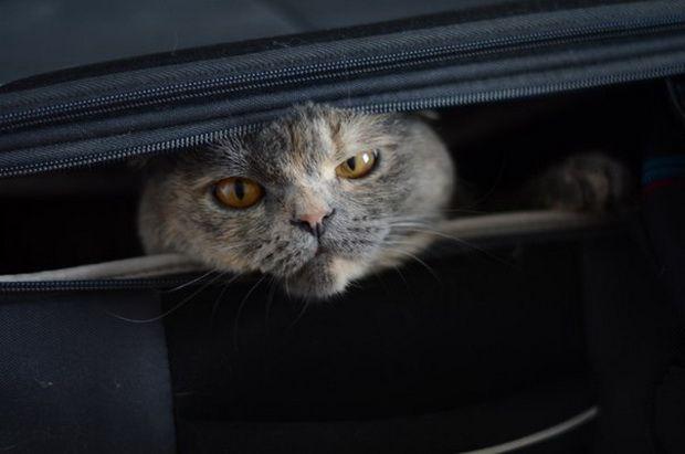 Правила перевезення тварин авіатранспортом