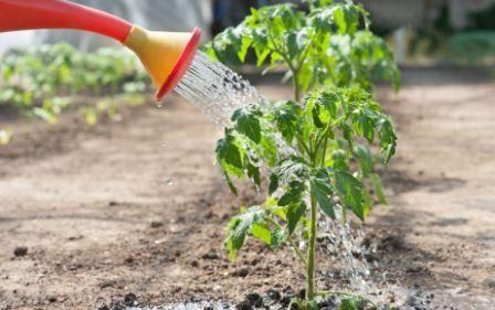 Правила поливу овочів, що і скільки поливати