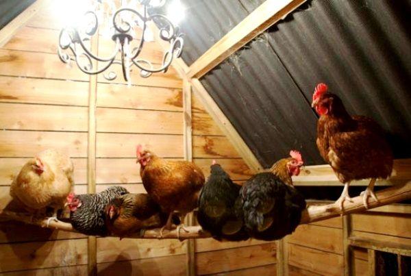 Освітлення в курнику взимку