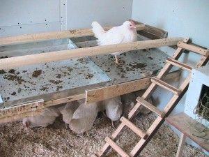 Сідало з піддоном для посліду в курнику