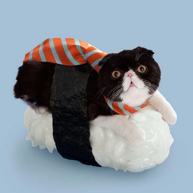 Пригоди суші-кішок