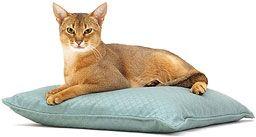 Приручення дикої кішки