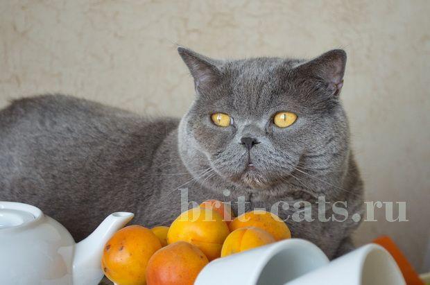 Проблеми з апетитом у кішок