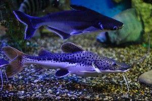 Тривалість життя акваріума
