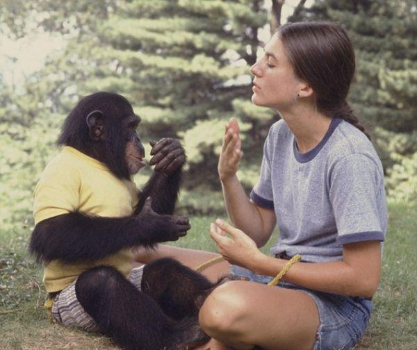 Проект Ним, або спроба перетворити мавпу в людину