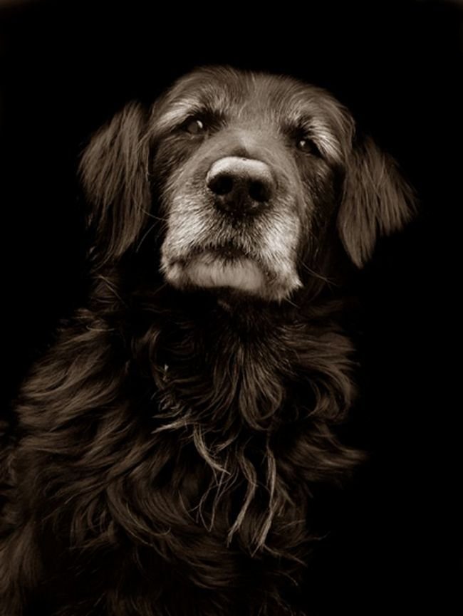 Проект Треер Скотта: Собаки з притулку