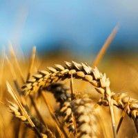 Прогнози зерноринку україни 2014-2015 мг