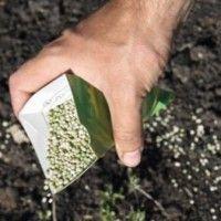 Виробництво насіння супереліти і еліти