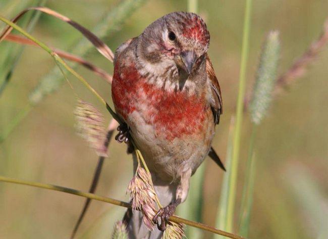 У цій птахи дивне оперення.