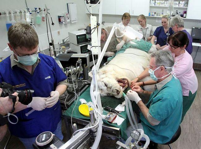Наші будні та свята ветеринара-стоматолога