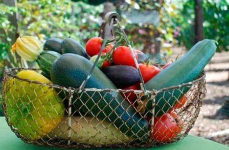 Роботи на городі і саду в серпні