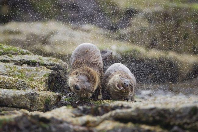 Роботи переможців британського конкурсу фотографії дикої природи