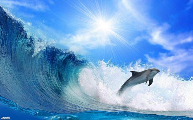Дельфіни вмирають від радіації.