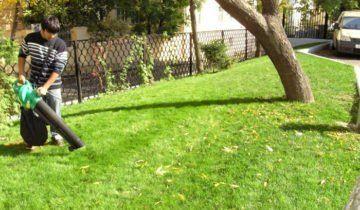 Процес чищення газону, soweren.ru