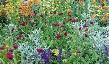 Фотографія квіткового газону, soweren.ru