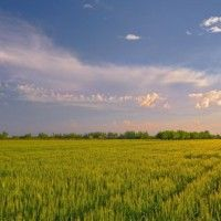Рослинництво як галузь сільського господарства