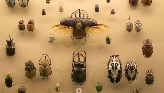 Різноманітність сучасних жуків пояснили їх стійкістю до вимирання