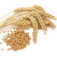 Різновиди м`якої і твердої пшениці