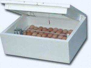Штучна інкубація індичих яєць