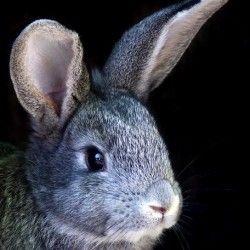 Розведення кроликів в домашніх умовах