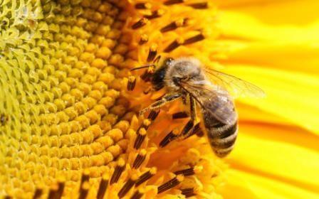 Розведення бджіл для початківців