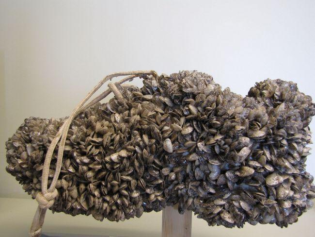 Ось так ось колонія молюсків обліплює будь-які, довго знаходяться в воді предмети