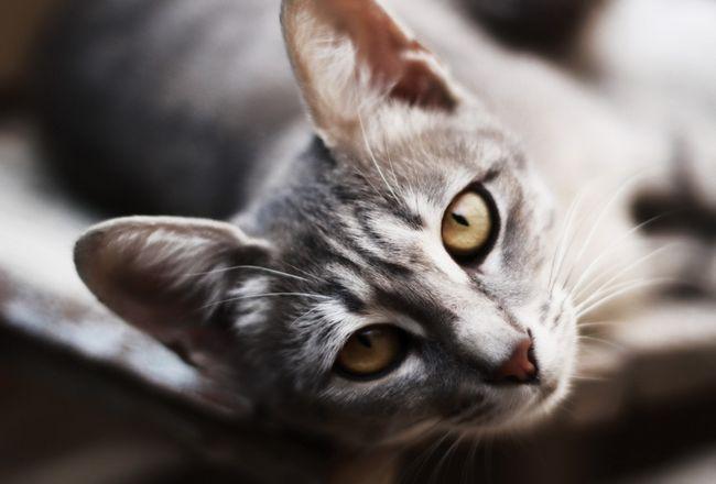 Рідкісні і гарні імена для кішок і котів