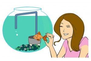 Рекомендації по догляду за акваріумом