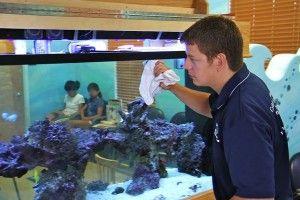 Ремонт акваріума в домашніх умовах