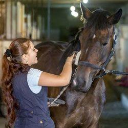 Керівництво по правильному догляду за кіньми