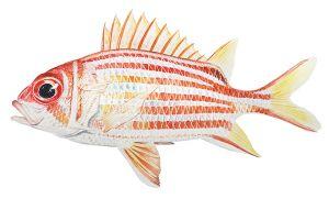 Риба-білка