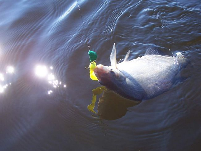 Риболовля на ляща - захоплююче заняття.