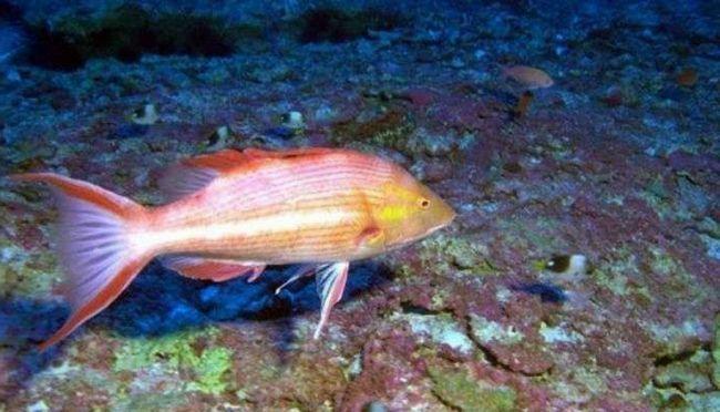 Ця поки що безіменна риба отримає ім`я американського президента.
