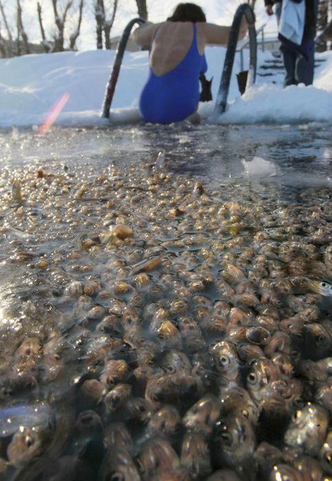 Риба задихається в ставках Санкт-Петербурга