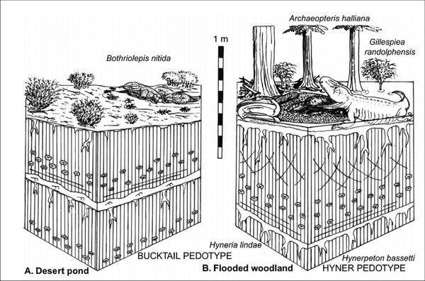 Малюнок, що ілюструє дві гіпотези перетворення риб`ячих плавників в лапи наземних хребетних: зліва - предок амфібії виходить з висихає ставка в пустелю, праворуч - той же предок полює в заплавних водоймах. (Малюнок авторів роботи.)