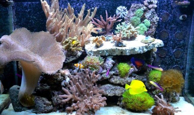 Акваріум з морськими рибками.