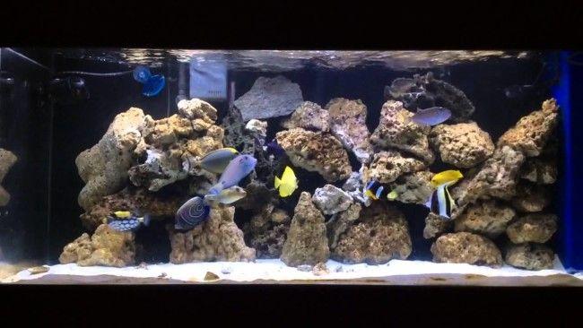 Різноманітні морські рибки.