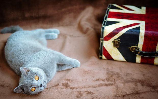 З ким залишити кішку на час відпустки?