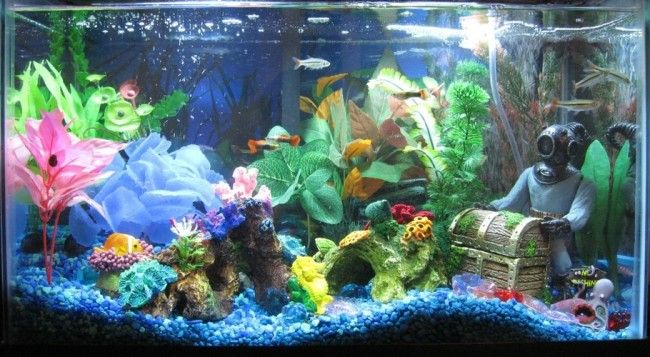 Загальний акваріум з гуппі.
