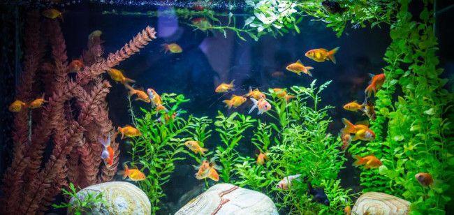 Акваріум з різними рибками.