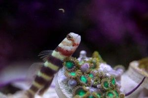Найменша рибка в світі