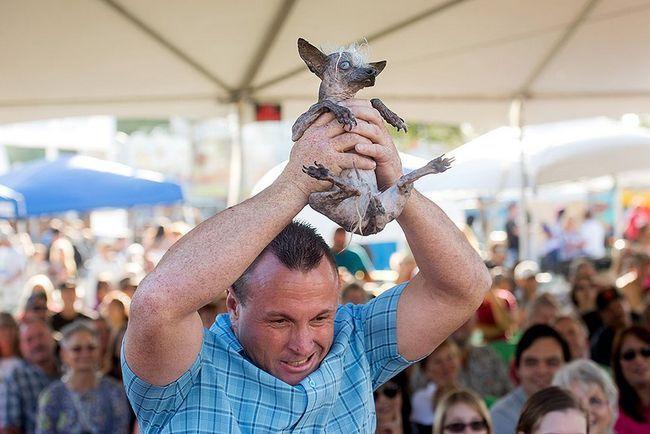 Найбільша потворна в світі собака виграла півтори тисячі доларів