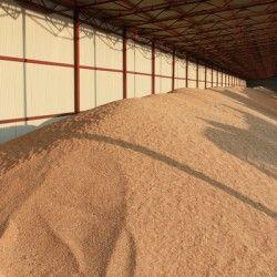 Самосогревание зернових мас