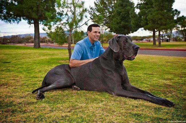 Найбільші домашні тварини.