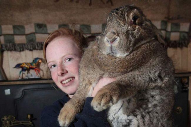 Кролик Ральф і його господиня.