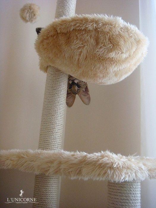 Домашній Сервал (domestic Serval)