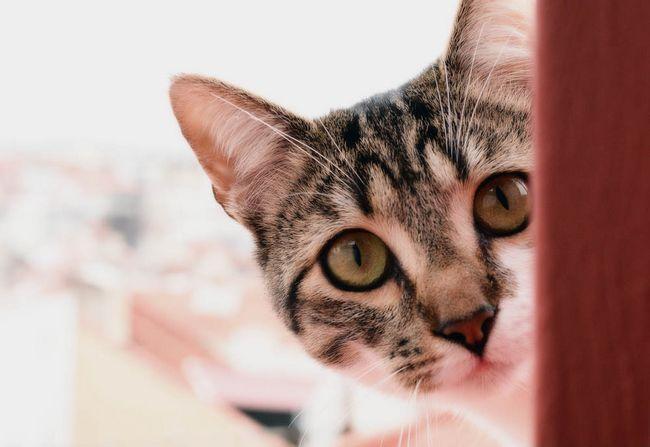 Найцікавіші факти про кішок