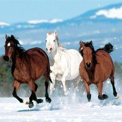 Найцікавіші і захоплюючі факти про коней